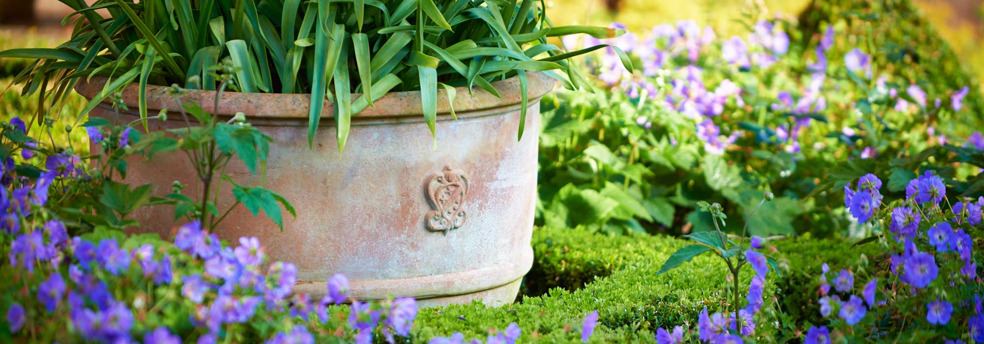 large terracotta pots planting suggestions